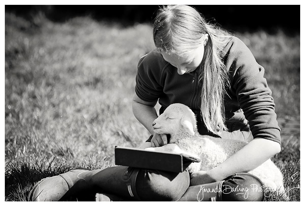 A pet lamb helps with exam revision by Amanda Darling Photography Surrey