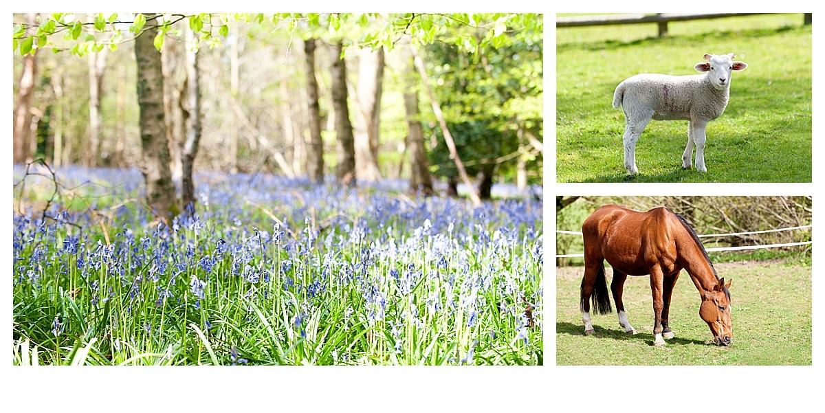 Noke-farm-CR5-Surrey-Amanda-Darling-Photography-Family-Photography