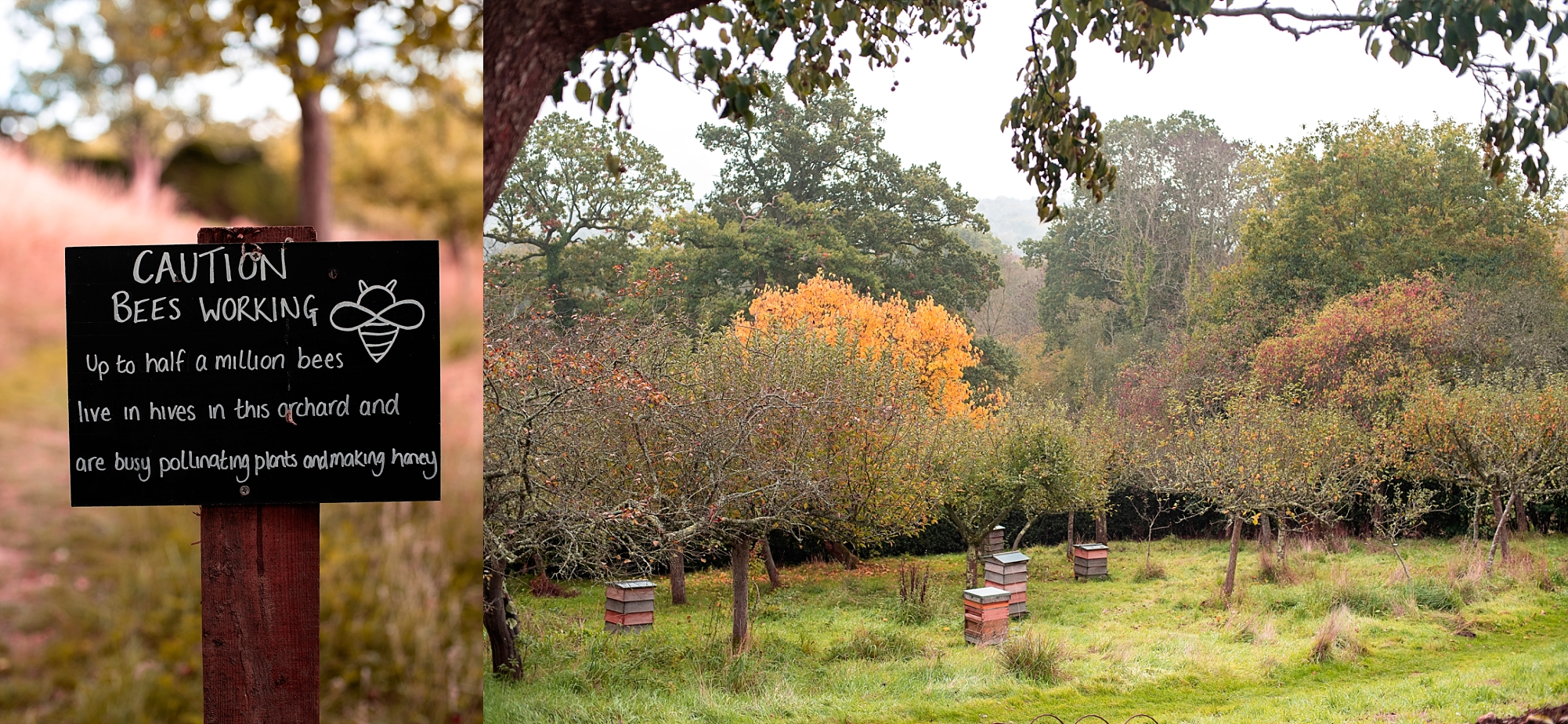 Photo of the orchard and beehives at Standen House