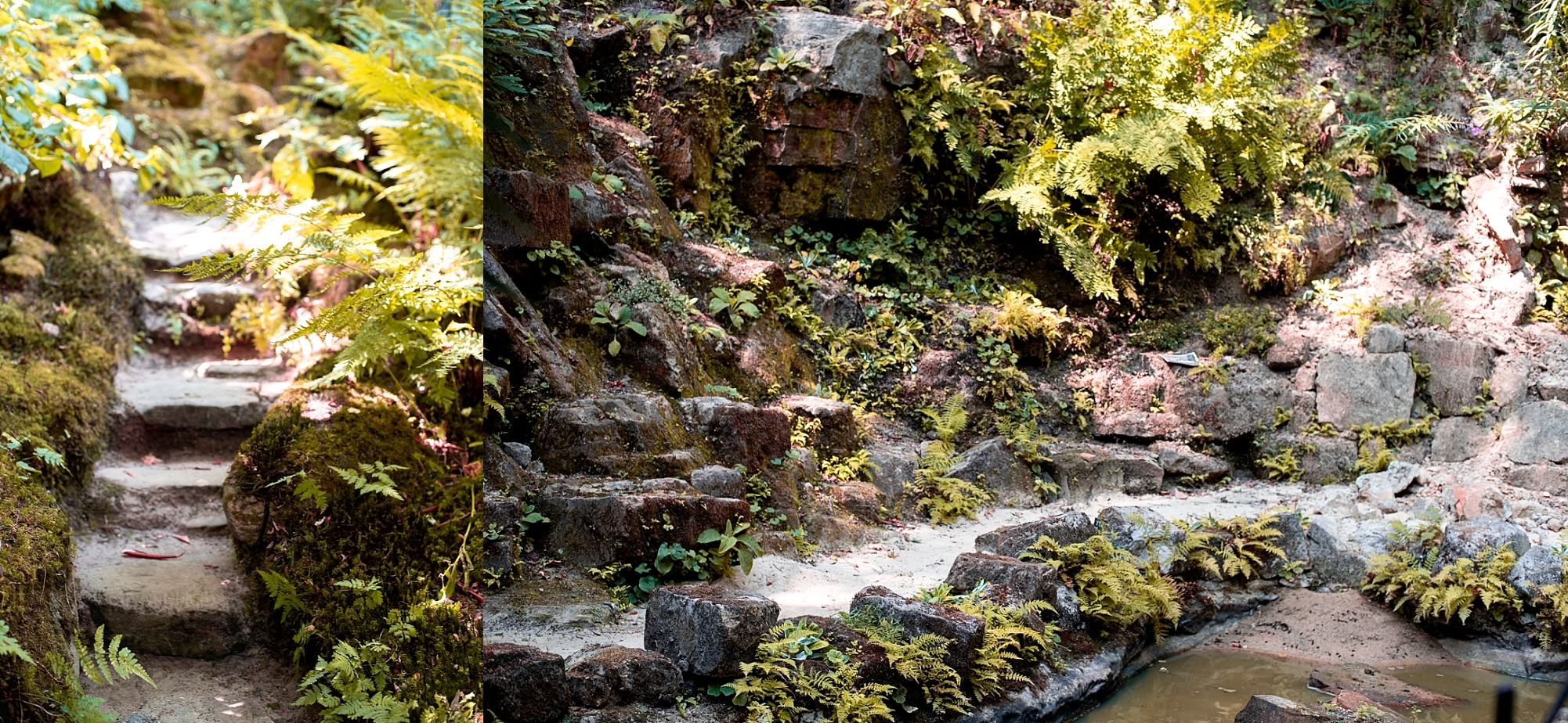 Photo of the Quarry garden and fernery at Standen House National Trust